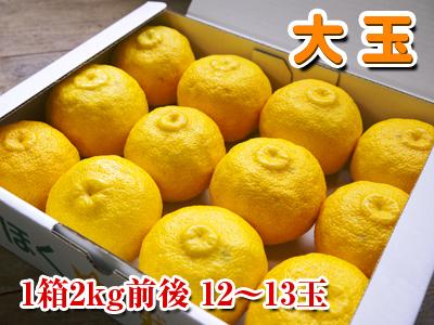令和元年度の色付いた『香り高き柚子』本日より先行予約受付スタート!!商品ラインナップ紹介!_a0254656_14065326.jpg