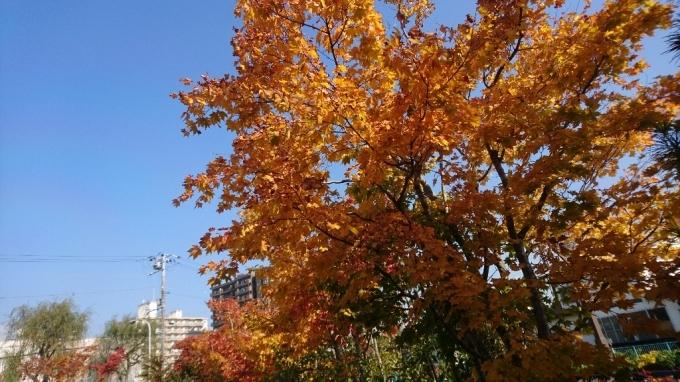 2017年10月25日(水)今朝の函館の天気と積雪、気温は。函館の紅葉は_b0106766_06525887.jpg