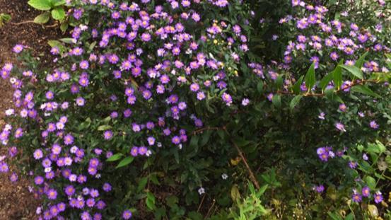野菊の華やかさ_b0214473_1213483.jpg