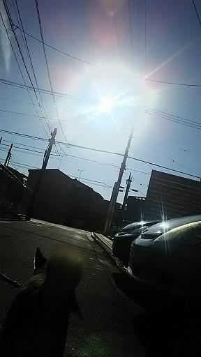 朝の散歩始めました_f0242002_20324461.jpg