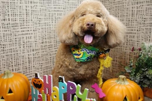 10月23日にご来店のわんちゃんです!!_b0130018_19383829.jpg