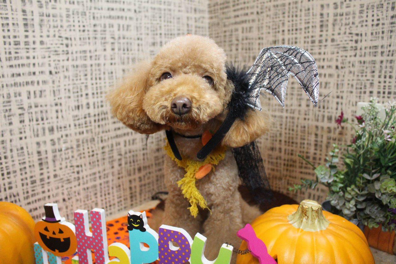 10月22日ご来店のお客様です!!_b0130018_21064709.jpg
