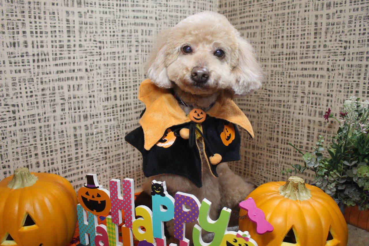 10月22日ご来店のお客様です!!_b0130018_21173425.jpg