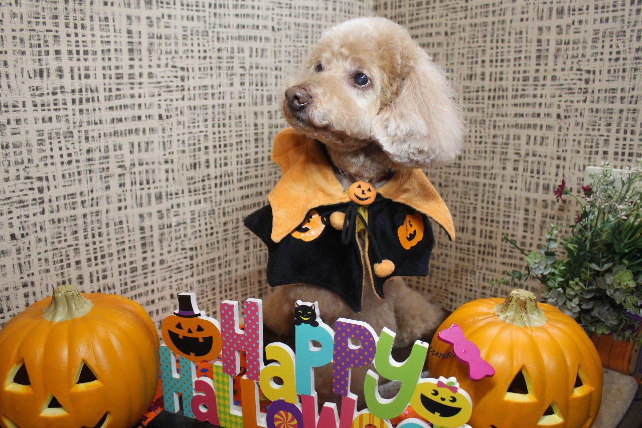10月22日ご来店のお客様です!!_b0130018_21174109.jpg