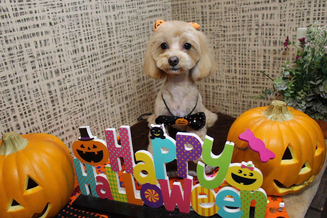 10月22日ご来店のお客様です!!_b0130018_21202011.jpg