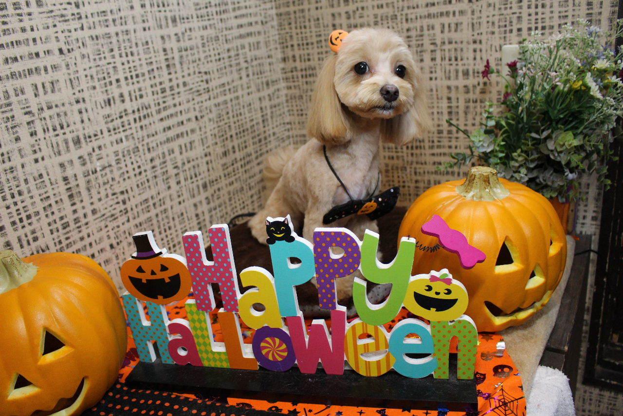 10月22日ご来店のお客様です!!_b0130018_21203657.jpg