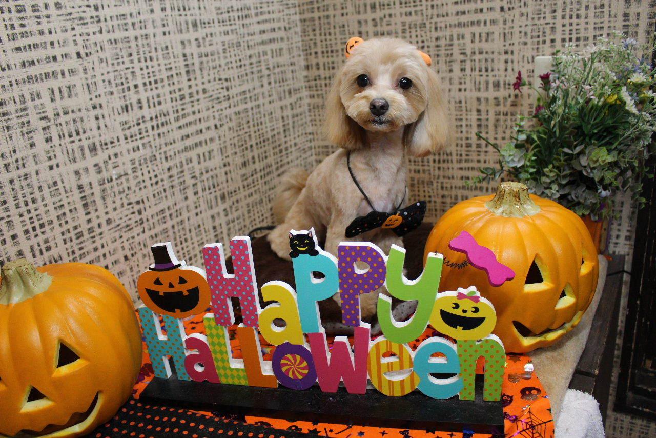 10月22日ご来店のお客様です!!_b0130018_21204912.jpg