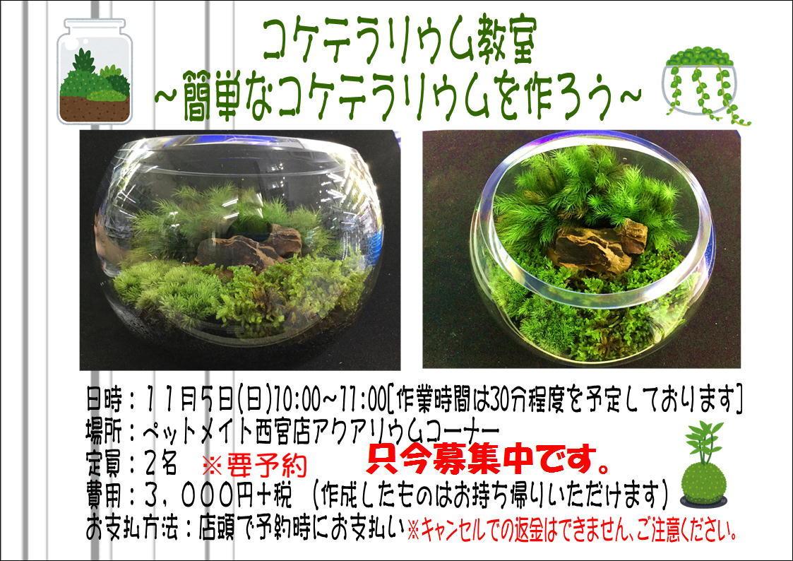 171012 熱帯魚・めだか・金魚・水草・観葉植物_f0189122_12564697.jpg