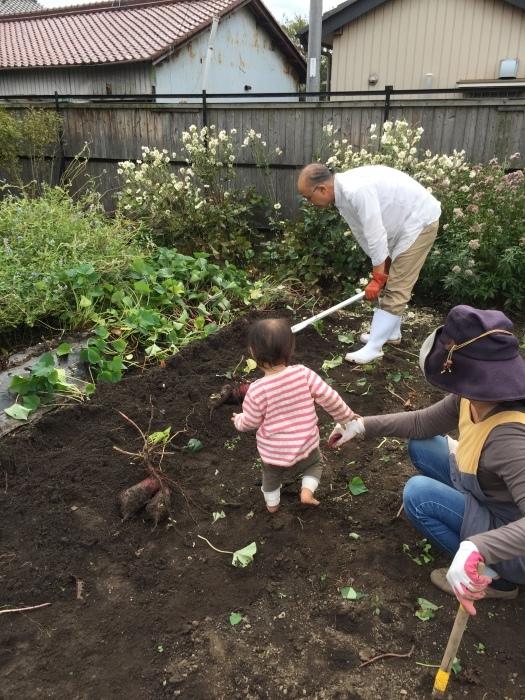 手始めに家の芋掘り_e0155231_21121543.jpeg