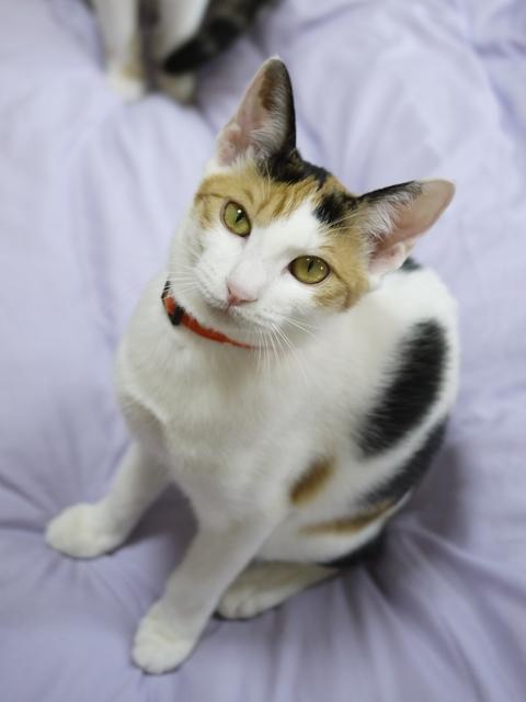 猫のお留守番 りんごちゃん編。_a0143140_22524485.jpg
