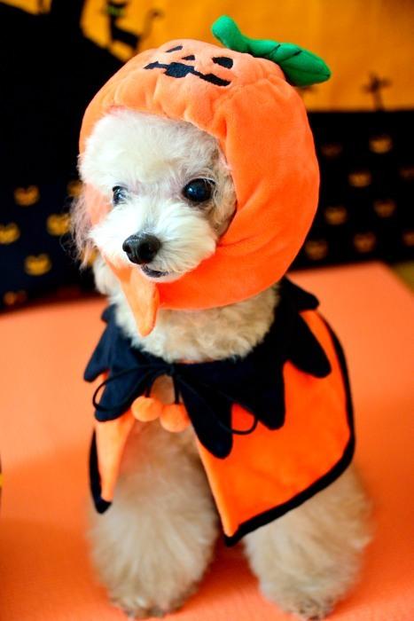 Happy Halloween`_a0145741_15134873.jpg