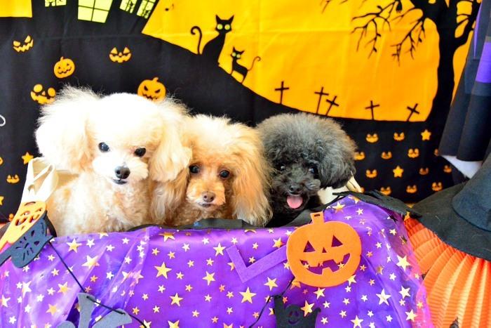 Happy Halloween`_a0145741_15140023.jpg
