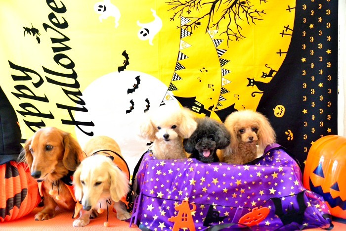 Happy Halloween`_a0145741_15142603.jpg