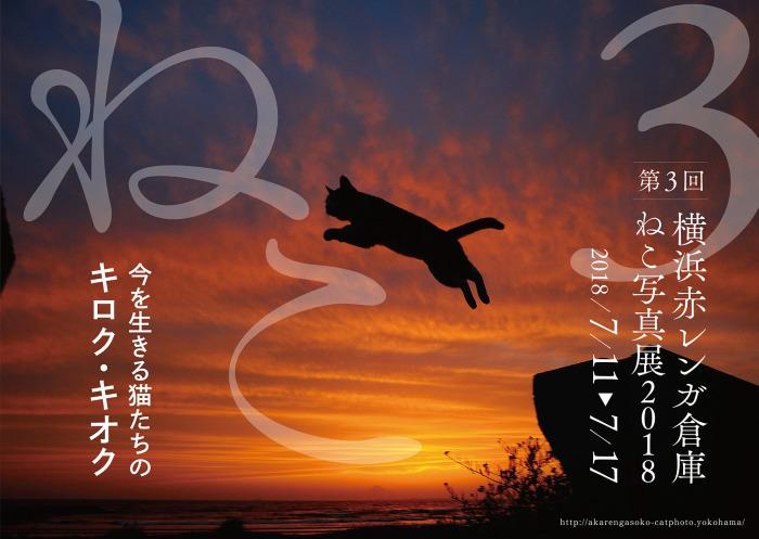 横浜赤レンガ倉庫ねこ写真展2018_c0194541_17262679.jpg