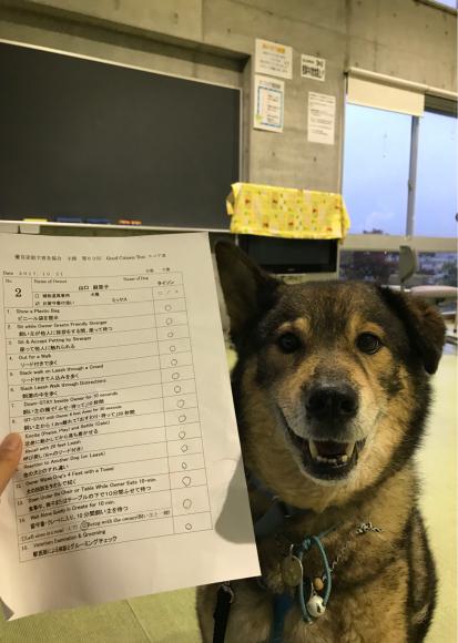 GCTに合格しました。念願のプラチナ犬_a0126743_23240074.jpg