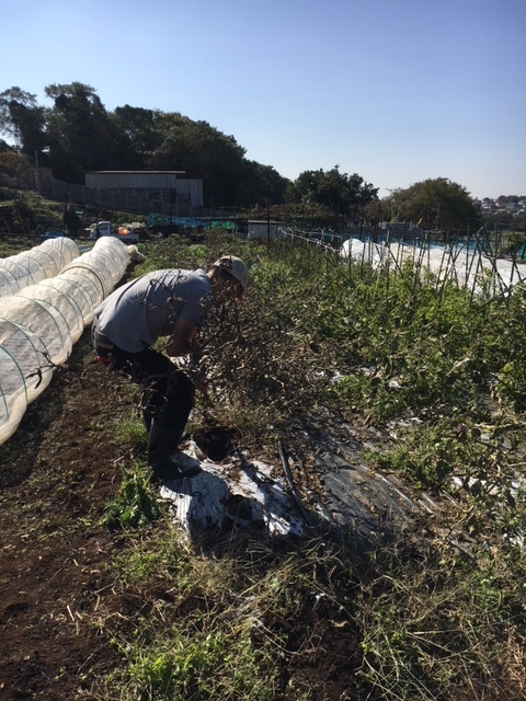 蚕豆の畝作り開始します 本日は飯田含めて男性3名の手でしたので草刈り機 堆肥播き 力仕事中心でした。_c0222448_14535667.jpg