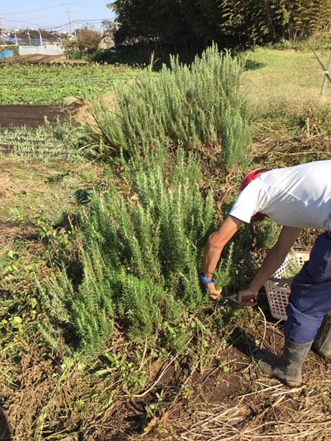 蚕豆の畝作り開始します 本日は飯田含めて男性3名の手でしたので草刈り機 堆肥播き 力仕事中心でした。_c0222448_14594147.jpg