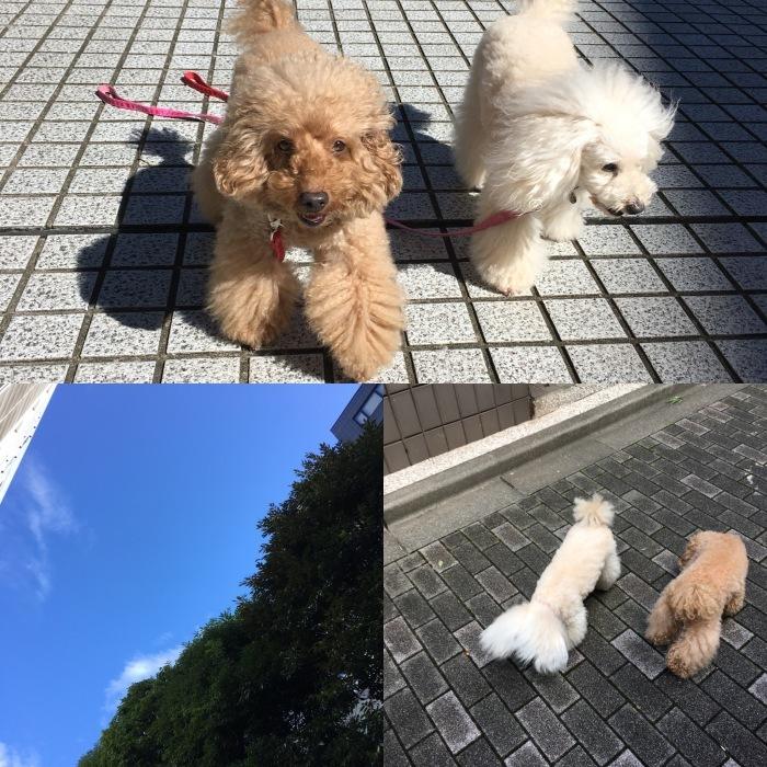 2017.10.26  台風、はじめ異変が連続・・・_a0083571_10173064.jpg