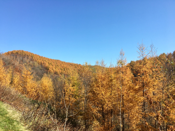 今日も秋晴れです☀️ 紅葉も終わり、カラマツの黄葉が良い感じになってきました。 来週の連休あたりがピークなかんじです&#128512; またまだ、宿やってますから、遊びに来て下さいね〜。</p>_f0096216_10384439.jpg
