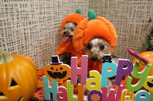 10月24日ご来店のわんちゃんです!!_b0130018_21030870.jpg