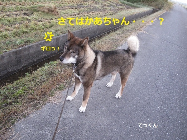 f0143123_14041714.jpg