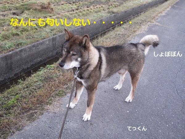 f0143123_14042696.jpg