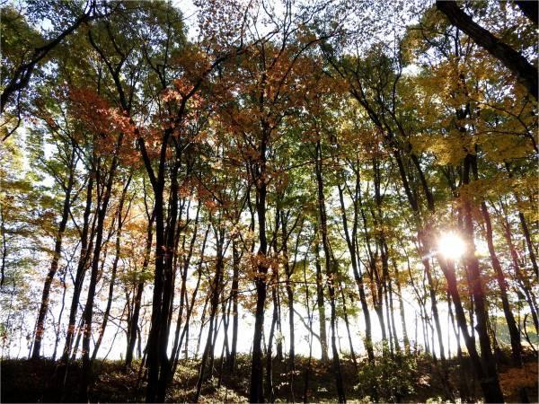 週末の天気と気温(10月4週目)_b0174425_09115846.jpg