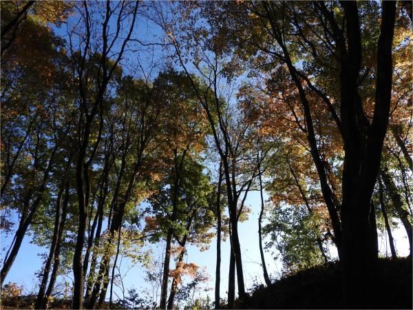 週末の天気と気温(10月4週目)_b0174425_09145712.jpg