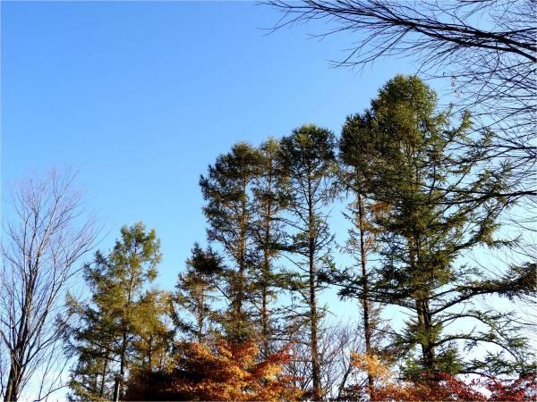 週末の天気と気温(10月4週目)_b0174425_09152137.jpg