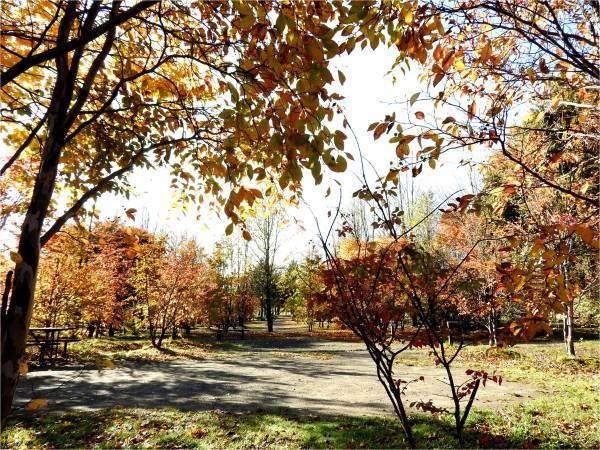 週末の天気と気温(10月4週目)_b0174425_09153698.jpg