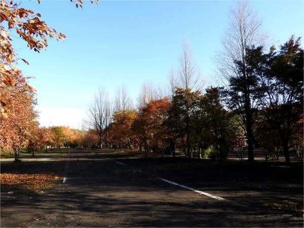 週末の天気と気温(10月4週目)_b0174425_09160310.jpg
