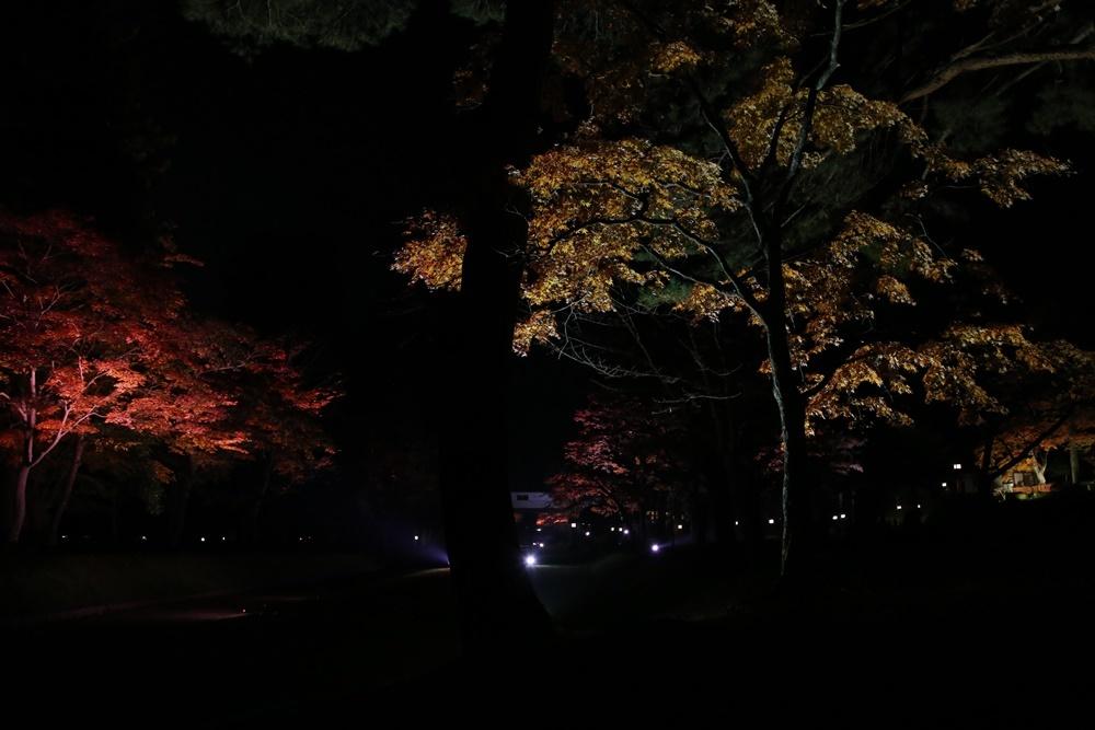 紅葉ライトアップ開始_c0111229_20521001.jpg