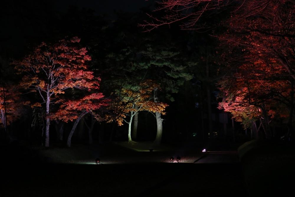 紅葉ライトアップ開始_c0111229_20521768.jpg