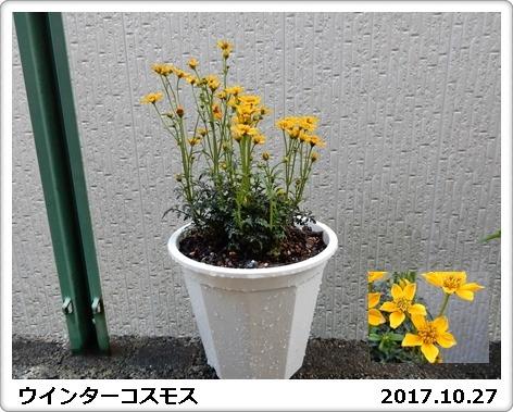 e0033229_1834282.jpg