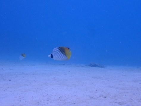 10月27日まだまだ静かな海で潜れてます_c0070933_22522255.jpg