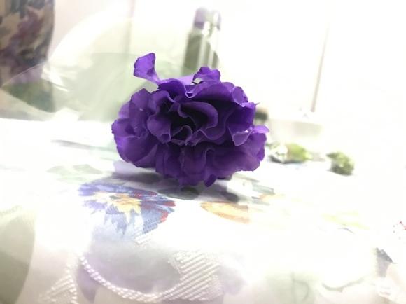 花と夫と300円byあのスルターンとスルターナの極めて平穏な1日_a0188838_19075455.jpg