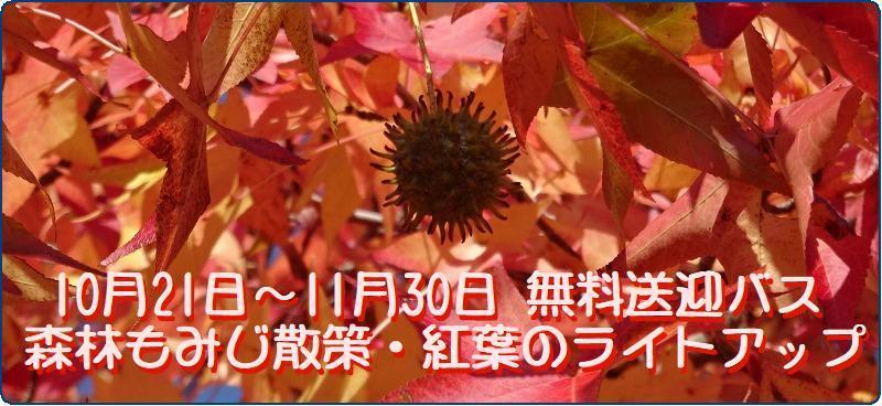 b0036638_17555873.jpg