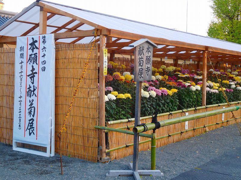 西本願寺「菊献展」20171027_e0237645_23095696.jpg