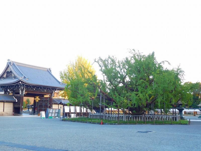 西本願寺のイチョウ20171027_e0237645_23150178.jpg