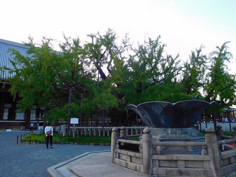 西本願寺のイチョウ20171027_e0237645_23193785.jpg