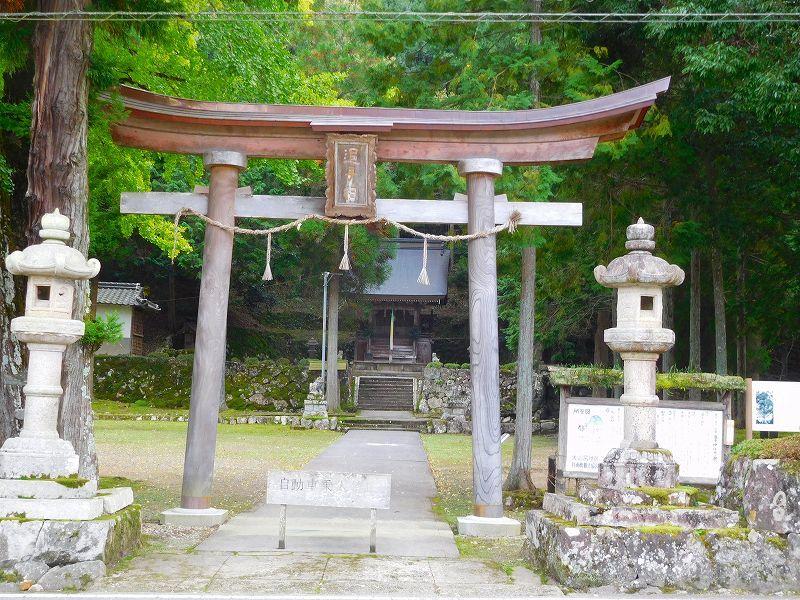 天然記念物「千年モミの木」(丹波追手神社)20171018_e0237645_23312496.jpg