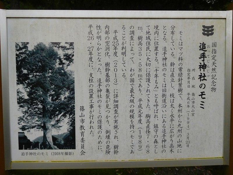 天然記念物「千年モミの木」(丹波追手神社)20171018_e0237645_23312539.jpg