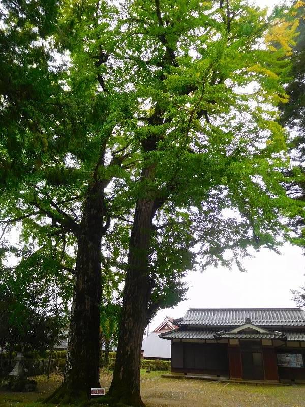 天然記念物「千年モミの木」(丹波追手神社)20171018_e0237645_23312545.jpg