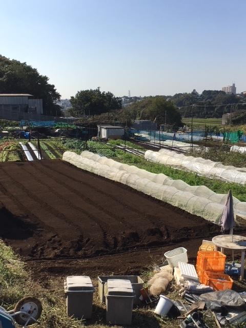 トラクター日和りです 今朝は飯田1人でしたので トラクタで整地後 収穫して戻りました_c0222448_14310469.jpg
