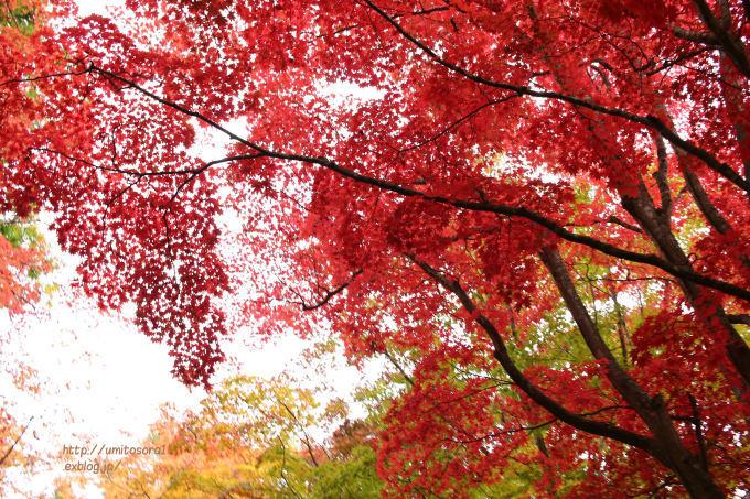 北の赤色_b0324291_00012812.jpg