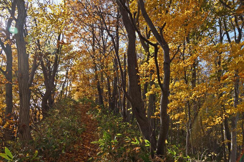 西野西公園散策_d0162994_08374842.jpg