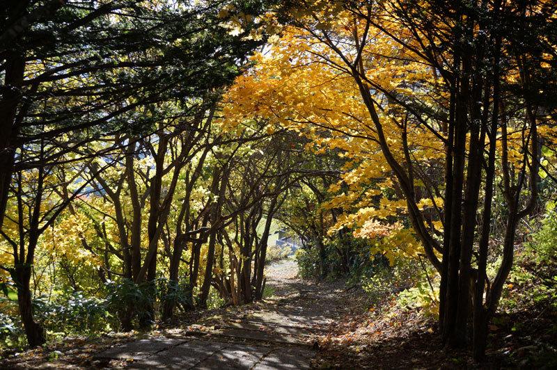 西野西公園散策_d0162994_08413823.jpg