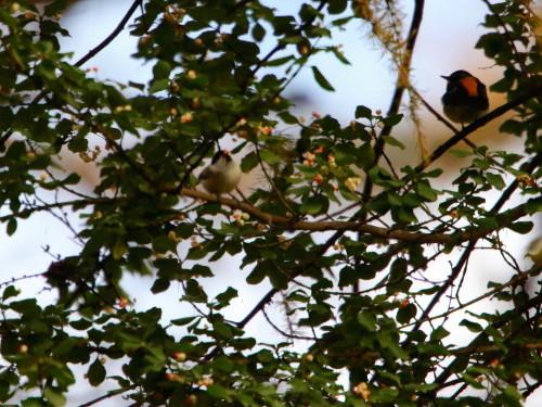ツルマサキに集まる鳥達②   コガラ    TGS_d0346713_20013965.jpg