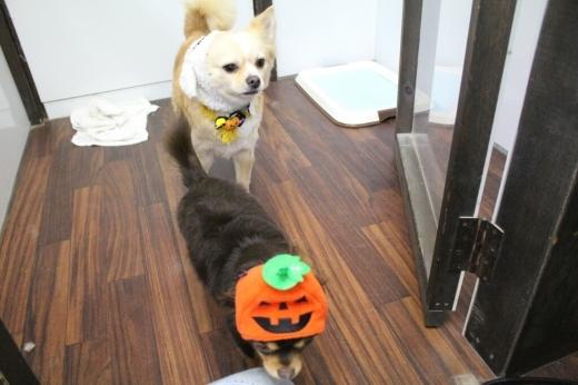 10月24日ご来店のわんちゃんです!!_b0130018_21321457.jpg