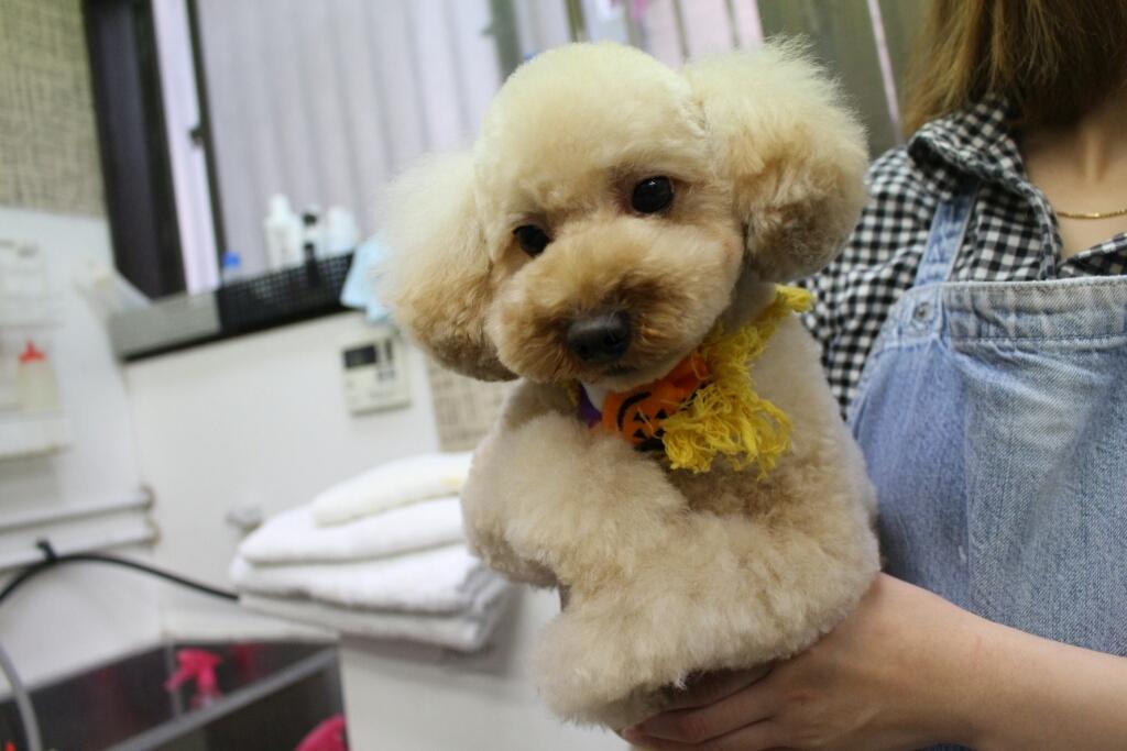 10月24日ご来店のわんちゃんです!!_b0130018_21322746.jpg